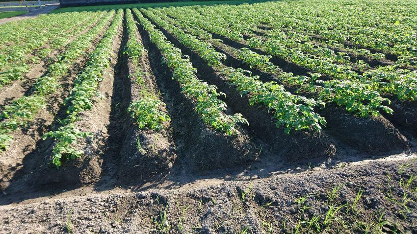 畑 Field Agriculture Day Sunlight Growth Outdoors Nature Shadow High Angle View No People Rural Scene Grass Beauty In Nature