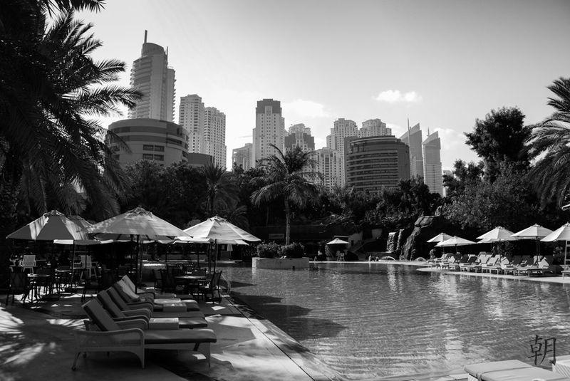 Dubai Palm Trees Pool Relax Skyscrapers Sun Urban