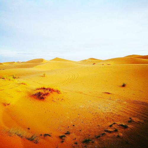 Merzouga Sahara Desert Trippin Beauty In Nature Morrocobeauty Morroco Sahara Desert Sahara Sahara Sand Camels Sandy Beautiful