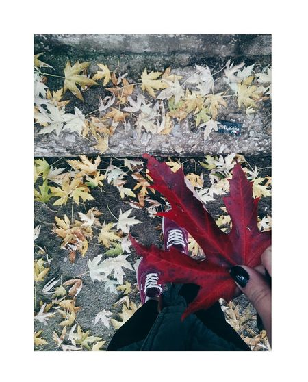 It was a beautiful autumn day Leaves Autumn Colors Autumn Fall Beauty Bordeaux Vans Off The Wall Vans Sarajevo One Person First Eyeem Photo