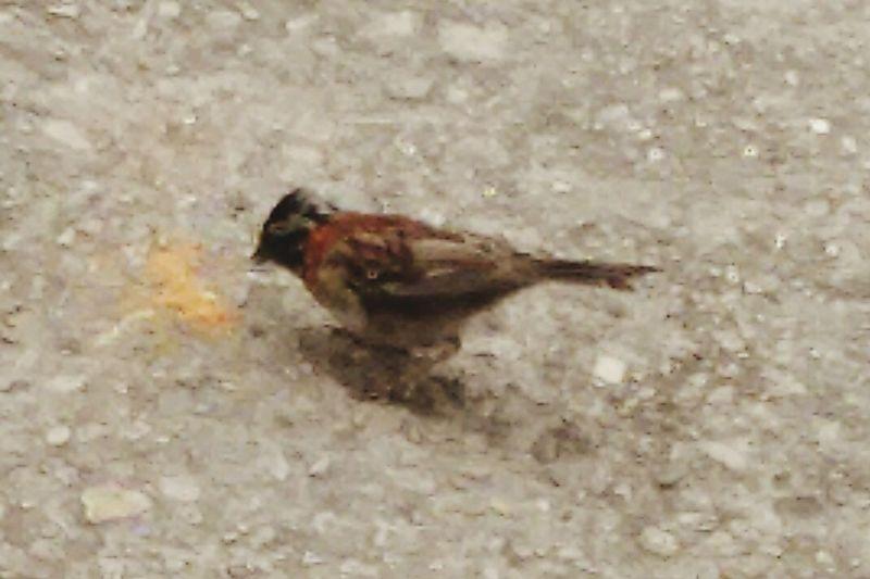 Aves Ave Aves 🐥🐤🐥 Pajaros Pajaro Pajaro