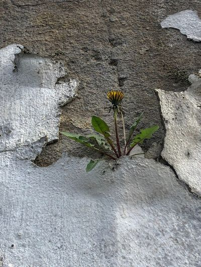 Close-up of plant on rock against wall