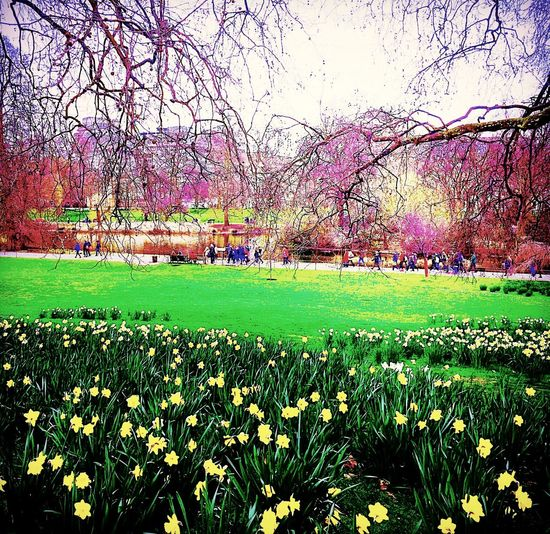 The Essence Of Summer London Park People Enjoying The Day. People Enjoying Life Outdoors Daffodils Blossoming Tree Blossom Tree Spring Has Arrived Yeeppy! No More Cold Happy :) Colours Of Nature Weekend Getaway The Great Outdoors - 2016 EyeEm Awards