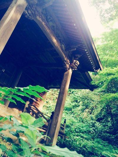 For IPhone Kamakura Myouhouzi June2015 Forest Temple Green Moss