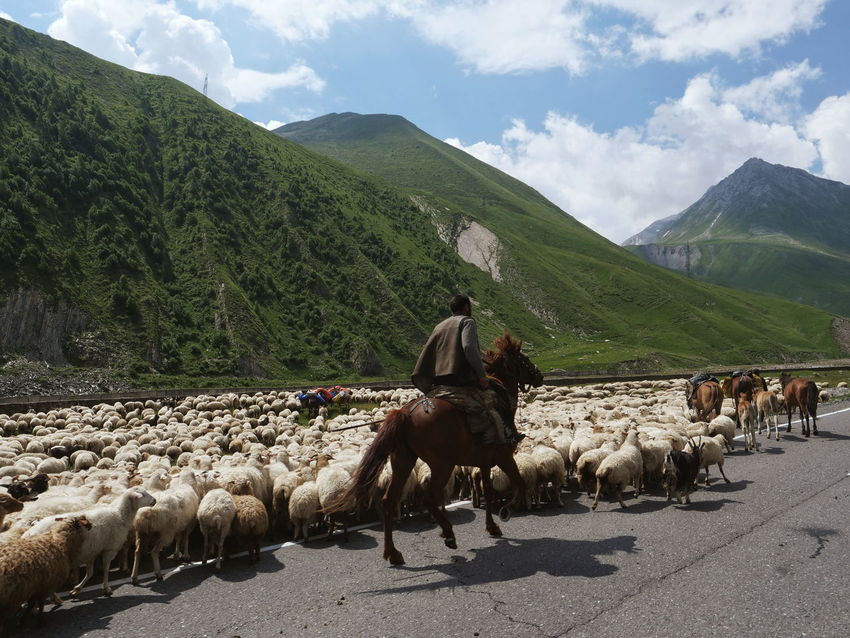 Georgia Caucasus Horse Sheep Herd Domestic Animals Animal Themes Livestock Cloud - Sky Mammal Mountain Nature Outdoors Adult People Only Men Shepherd Travel Traveling Transportation