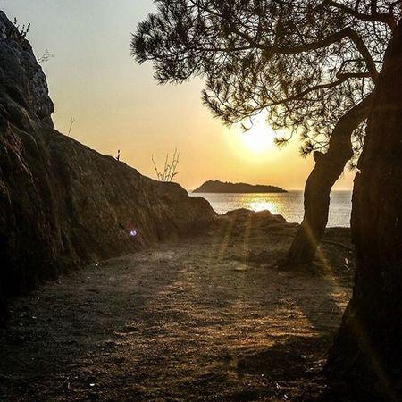 Greek Summer Lesvos