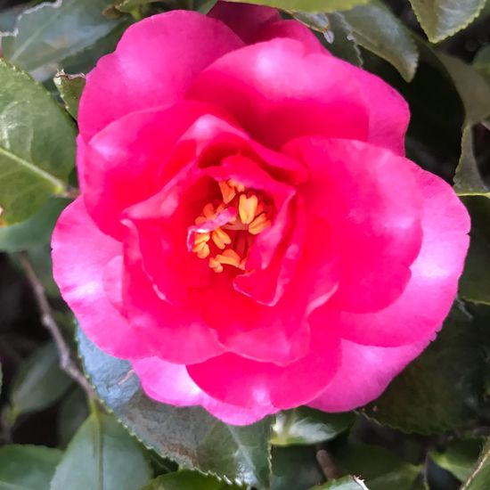 Flower Petal Nature Fragility Beauty In Nature Flower Head Outdoors Growth Day Freshness No People Pink Color Insect Wild Rose Close-up Blooming High Angle View