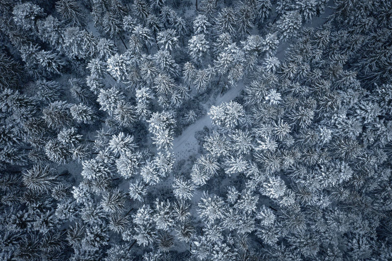 Backgrounds Full Frame Cold Temperature Snow Winter Frozen Outdoors Nature Abstract Frost Natural Pattern Pattern Texture Trees Forest Evergreen Tree Birds Eye View Drone Photography High Angle View