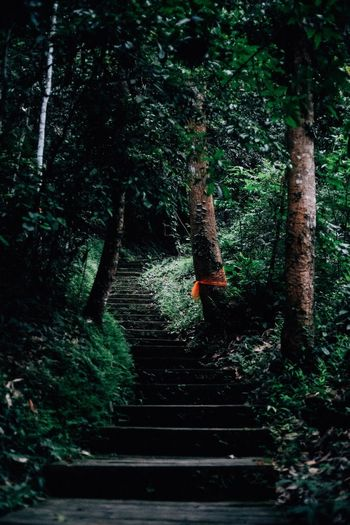 Tree Plant Real People Forest One Person Nature Day The Way Forward Green Color Lifestyles Steps And Staircases Footpath Outdoors