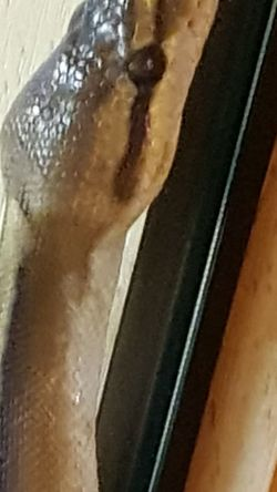 Snake Skin Snake Scales Snake Snakes Are Beautiful Snakes Of Eyeem Snake Photography