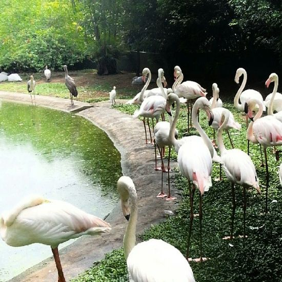 Animals Mobile Photography Travelphotography Malaysia Birdspark Birds Kualalumpur Holiday Popular Photos Photography