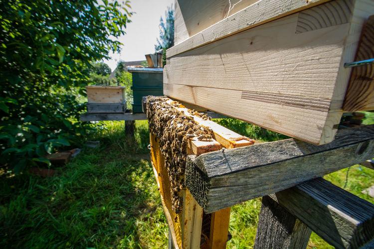 HoneyBee Bee