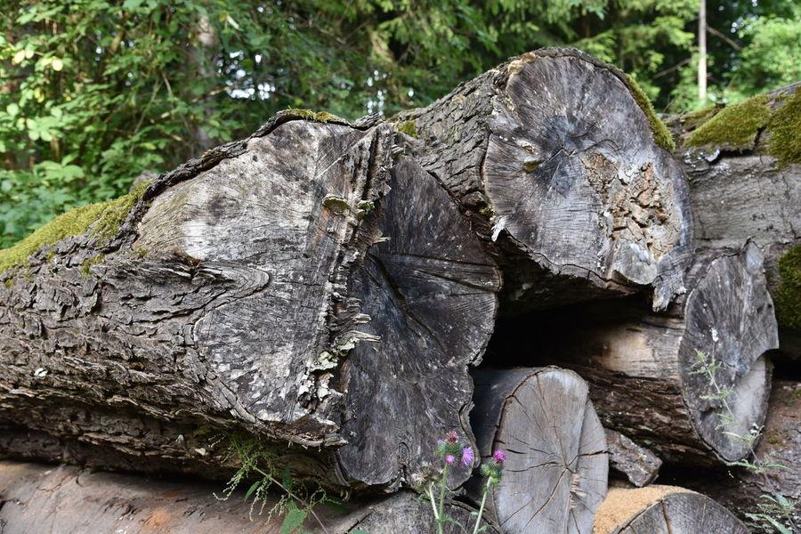 Bole Close-up Day Log Moss Nature No People Outdoors Tree Tree Trunk Tree Trunk Art Tree Trunk, Tree, Fallen Tree Tree Trunks
