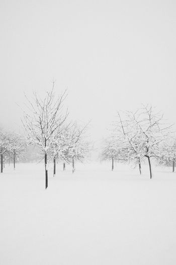Bare trees on snow covered field against sky