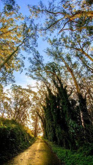 Daly City trail 👣 Sky Plant Life