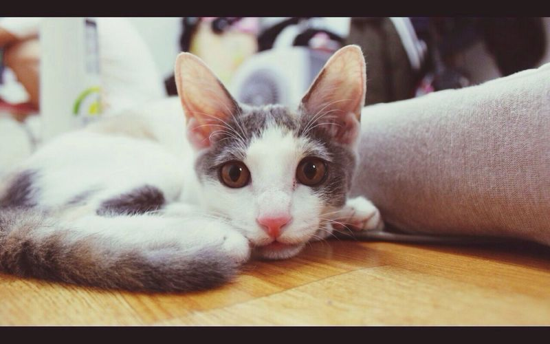 Cat Pet Cute
