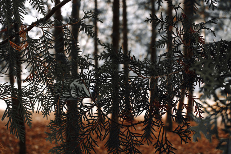 Plant Tree No