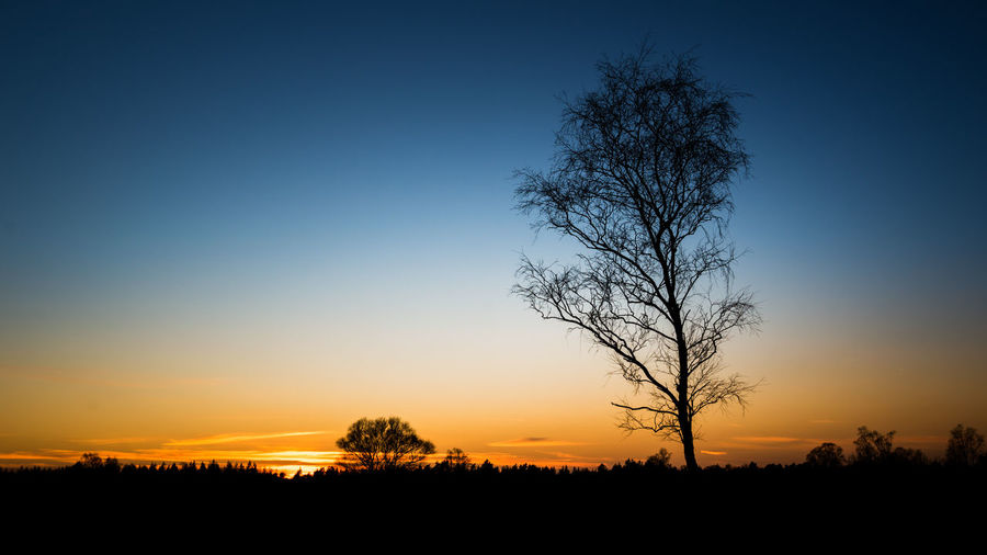 Bare Tree Beauty In Nature Blue Clear Sky Day Landscape Majestic Moon Nature No People Orange Color Outdoors Scenics Silhouette Sky Sunset Tranquil Scene Tranquility Tree