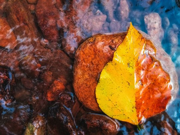 Leaves on stone in waterfall EyeEm Nature Lover Thailand EyeEm Best Shots Beauty In Nature EyeEm Selects Construction Garden Chiang Rai, Thailand Concept Egg Yolk Powder Paint Multi Colored Holi Yellow Close-up Full Frame Textured  Backgrounds Rough Abstract Backgrounds