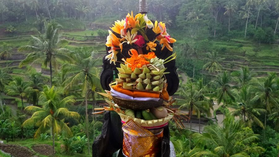 Tegalalang Bali Bali Natura Bali, Indonesia Balispirit Beauty In Nature Flower Green Color Islandlife Jeanmart Joseph Jeanmart Multi Colored Natura Nature Offering Offerings Orange Color Pure Real Real Life Tourism Tourisme Tranquil Scene