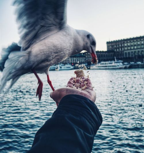 Midsection of man feeding seagull