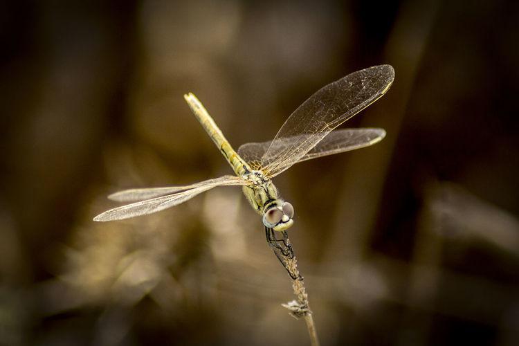 mosquito Nature