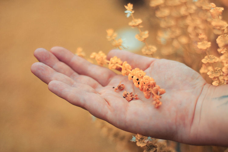 Animals In The Wild Close-up Day Finger Flower Flowering Plant Focus On Foreground Hand Holding Human Body Part Human Hand Lifestyles Nature One Person Outdoors Real People Selective Focus