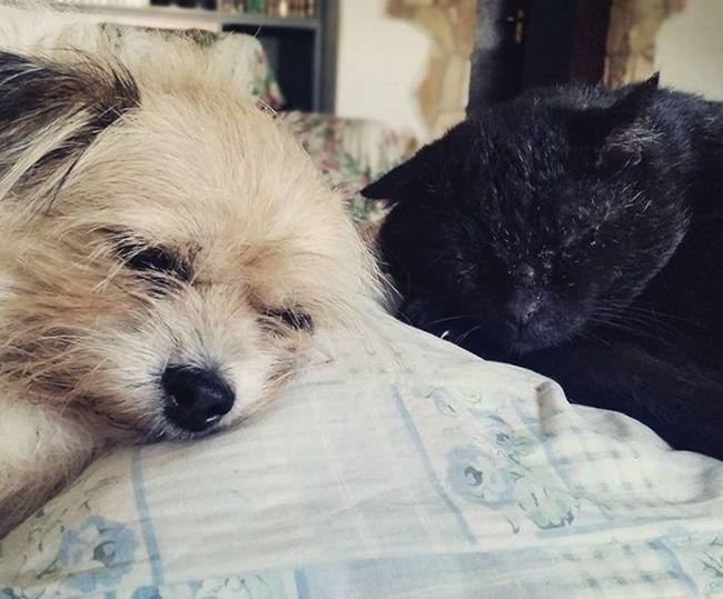 """L'amicizia tra razze diverse non è impossibile, ancora una volta sono quelli che chiamiamo """"gli animali"""" a dimostrarlo. Animals Dog & Cat Cani Gatti Friendsforever Life Peace Amicizia Senzalimiti Lezionedivita Photooftheday Tagsforlikes Photo DavideCalandra 2015"""