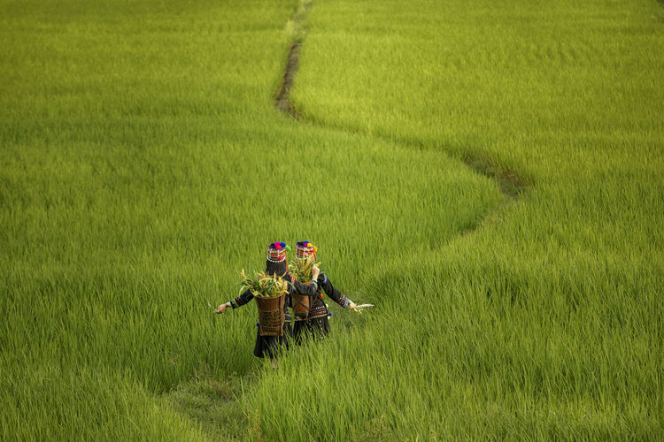 High Angle View Of Women Walking At Rice Paddy