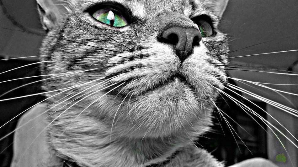 Watch dog Whiskers Eye4photography  HelloEyeEm Daydreamer OklahomaStrong Life In Color EyeEm Best Shots - Black + White Cats Of EyeEm Cats And Dogs This Sells Cat Dog Pets Corner Looking Out Of The Window EyeEm Animal Lover Eyeem Black And White Collection Feline Eyes Domestic Cat