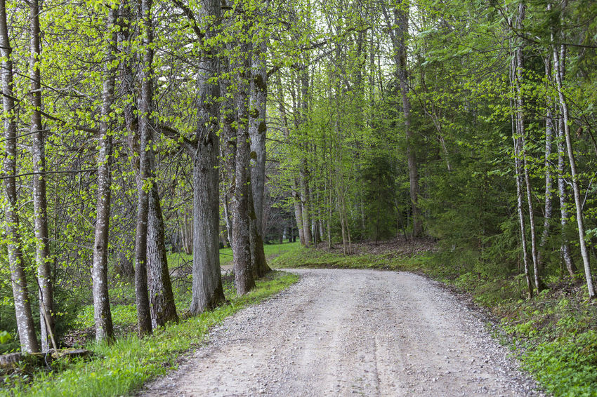 Alley Beauty In Nature Country Countryside Curved  Estonia Forest Forest Photography Gravel Nature No People Outdoors Park Parkway Road Spring Through Tree Tree Trunk Unpaved Walkway Way To Go Home Winding Road
