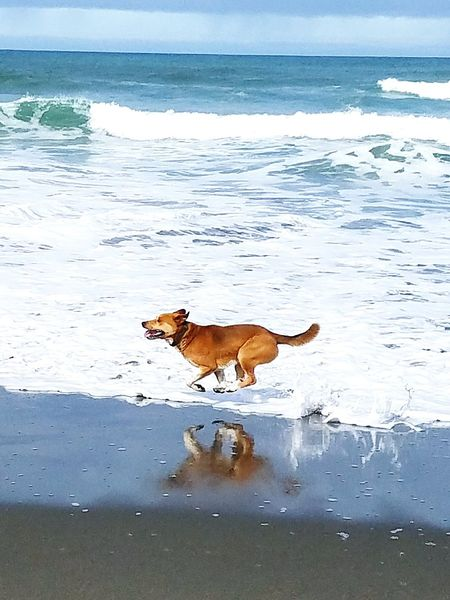 Dogs Dog Running Beach Dog :) Sea Wave Animal Themes Outdoors Runing Time Running