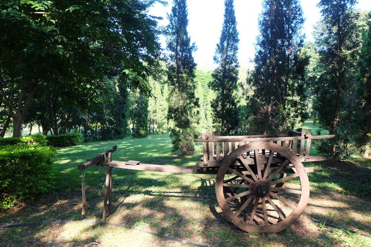 Plant Tree Nature Land Growth Transportation Day Tranquility No People Wood - Material Wheel Field Landscape Tranquil Scene Cart Outdoors Green Color Scenics - Nature Grass Sunlight Wagon Wheel