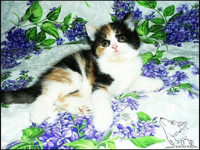кошка Cat котёнок Аллегра Black White Animals