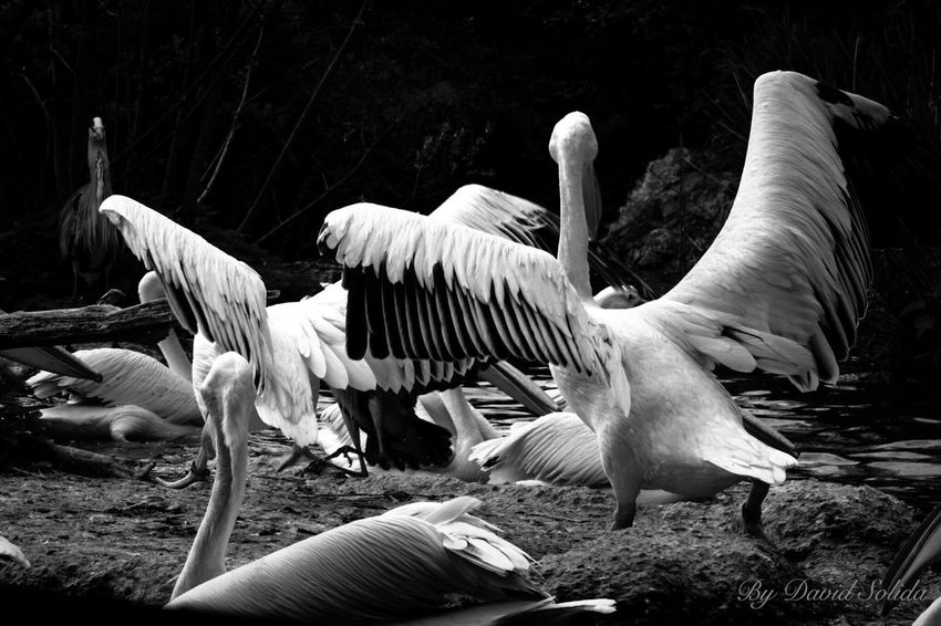 Zoo-Basel Bird Animal Themes Nature Outdoors Pelican Canonphotography Basel, Switzerland