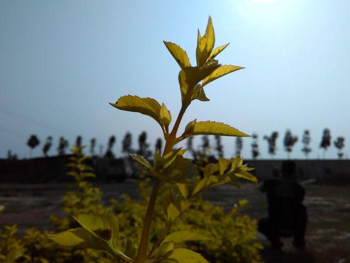 Little Yellow Plant Background Blur Focus On Plant Plant Photography Nature Photography Hanging Around Click