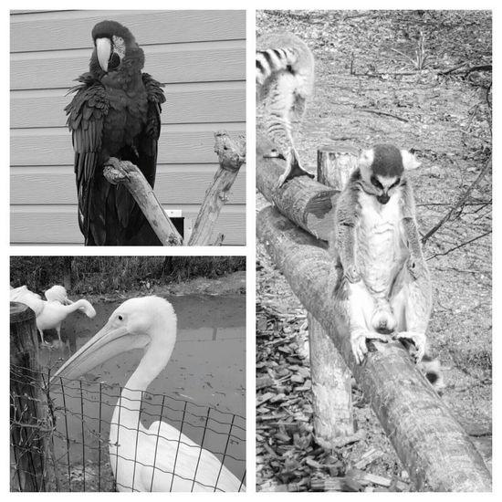 Zoo Cerza Lisieux