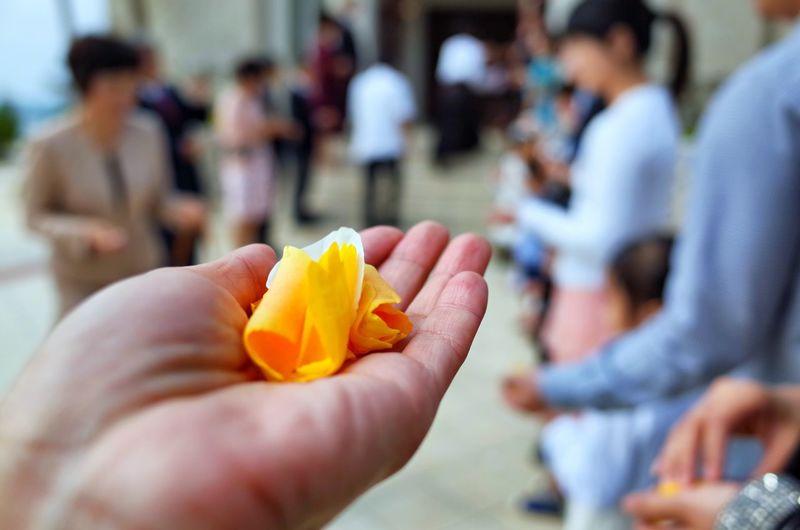 Rose petal 🌹