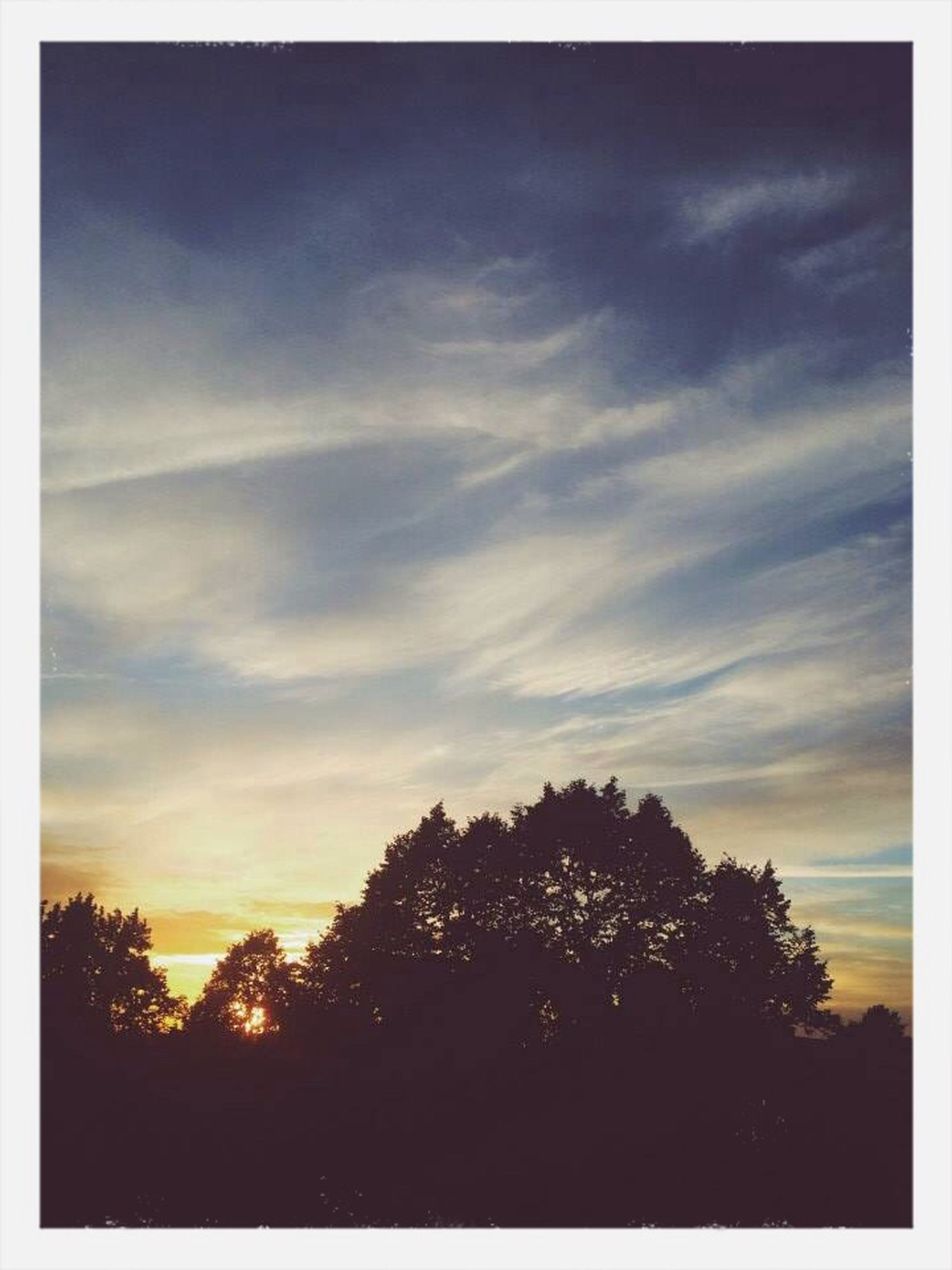 tree, silhouette, sunset, sky, tranquility, tranquil scene, beauty in nature, scenics, transfer print, nature, cloud - sky, auto post production filter, idyllic, growth, cloud, landscape, low angle view, orange color, outdoors, no people