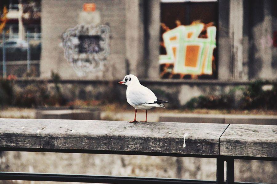 EyeEm Selects Bird Outdoors