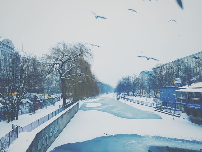 It's Cold Outside Landwehrkanal Kreuzberg Neukölln Winter Snow Ice River Berlin Berlin Winter Seagull Blue White