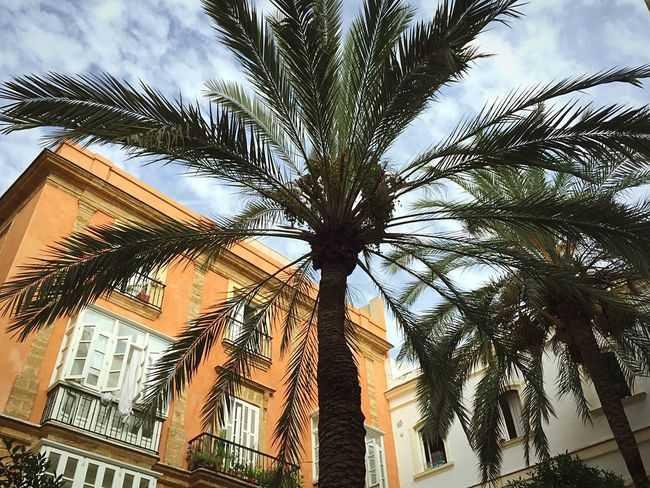 Palm Trees Summer Views Courtyard  Plaza Square