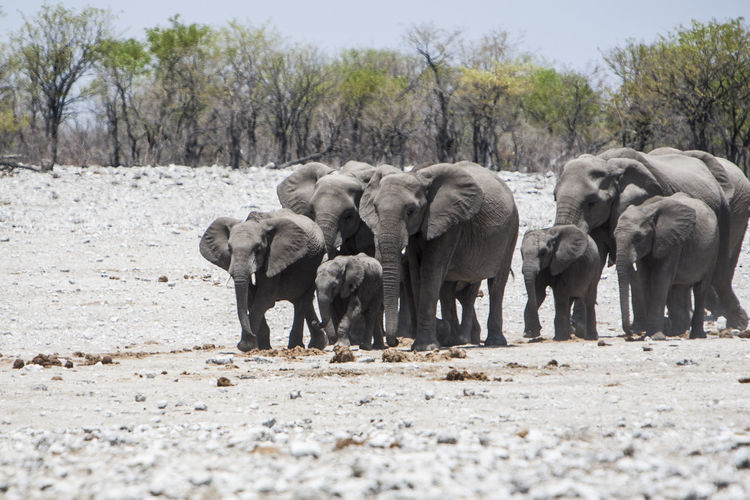 Elephants on field during sunny day