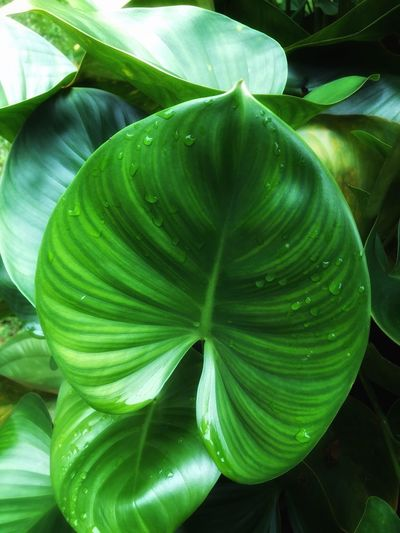 Leaves are