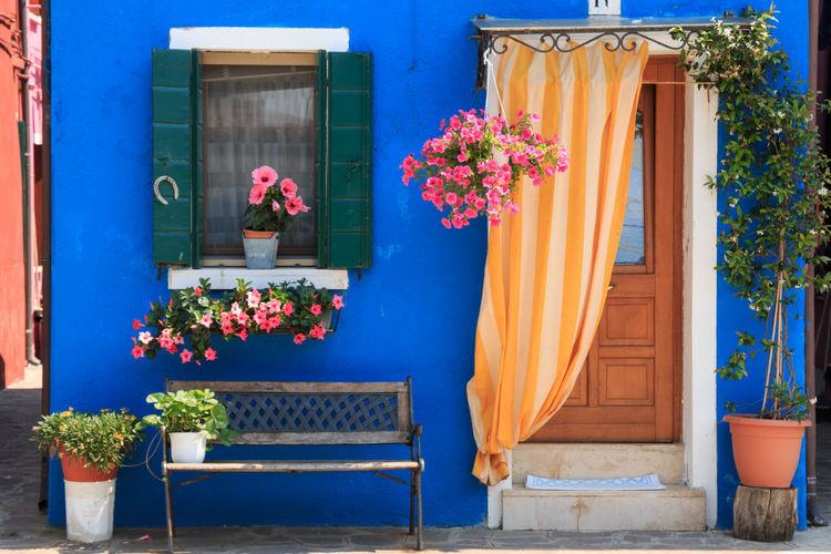 Flower pots on window of blue house