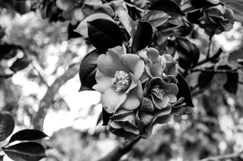 The flowers Black And White Monochrome Light And Shadow Flowering Plant Growth Vulnerability  Beauty In Nature Fragility Nature Petal Flower Head Tree Plant Part Close-up Outdoors Freshness