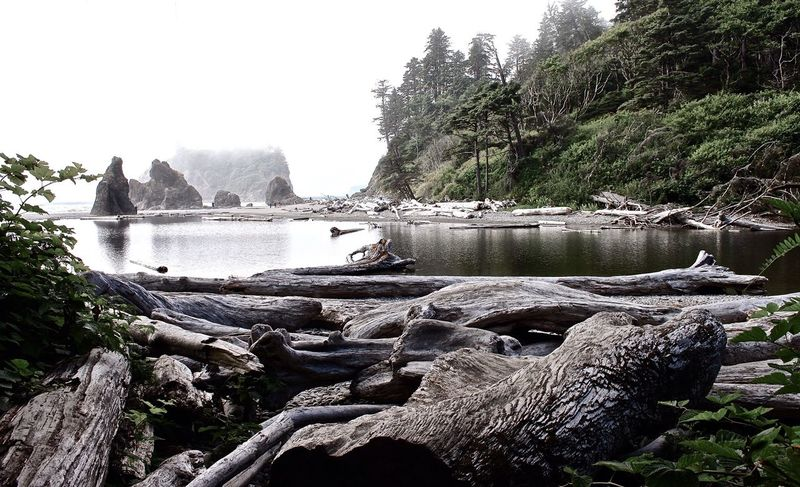 Rubybeach Beautiful Place Beautiful Nature Ruby Beach Protecting Where We Play Landscape_Collection Landscape_photography Romantic Landscape Romantic Place Foggy Day Landscapes With WhiteWall The Great Outdoors With Adobe