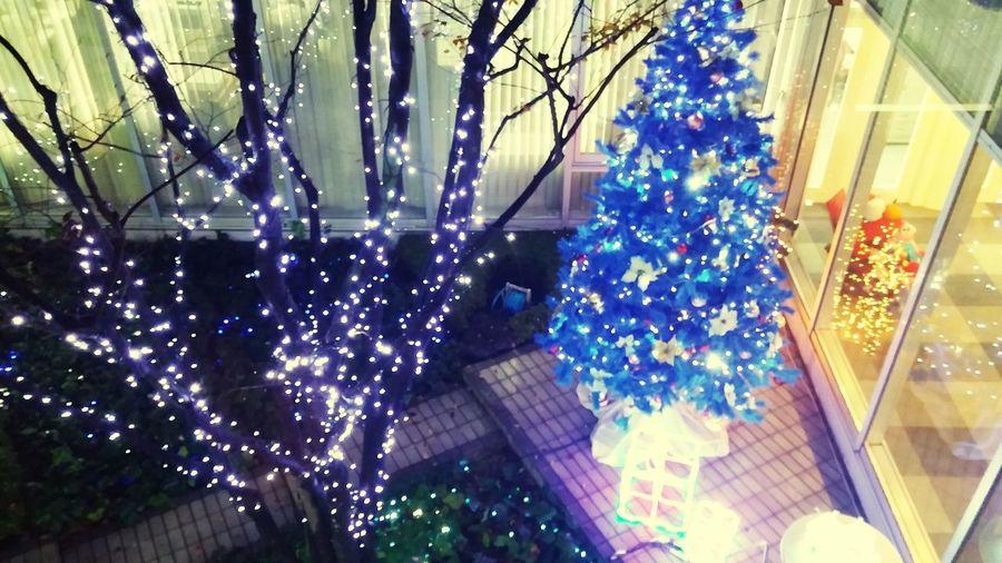 メリークリスマス Enjoying Life ライトアップ クリスマスツリー
