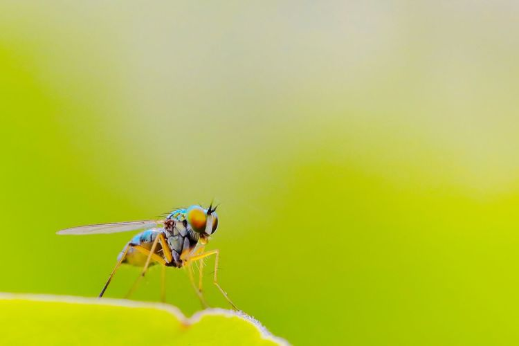 Fly #fly #green