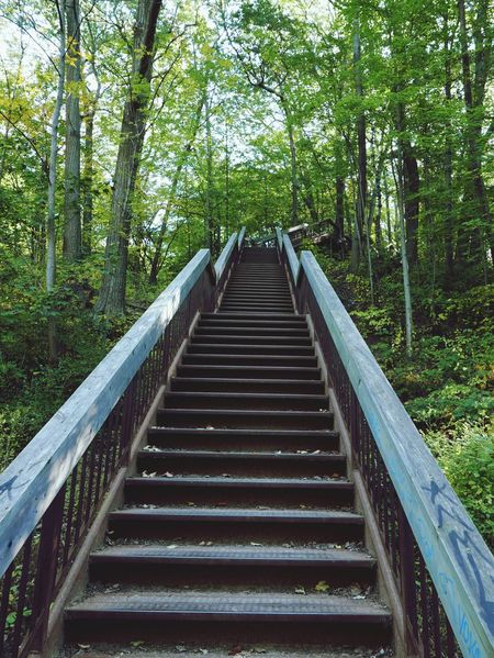 Stairway in the ravine Stairs Fitness Ravine Stairways Workout Outdoors Excercise Woods Forest